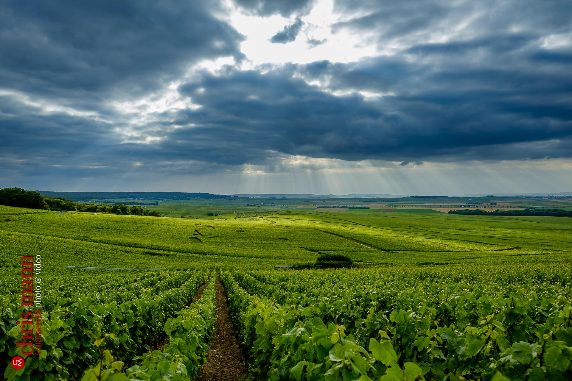 Champagne vineyards near Reims Picardy France