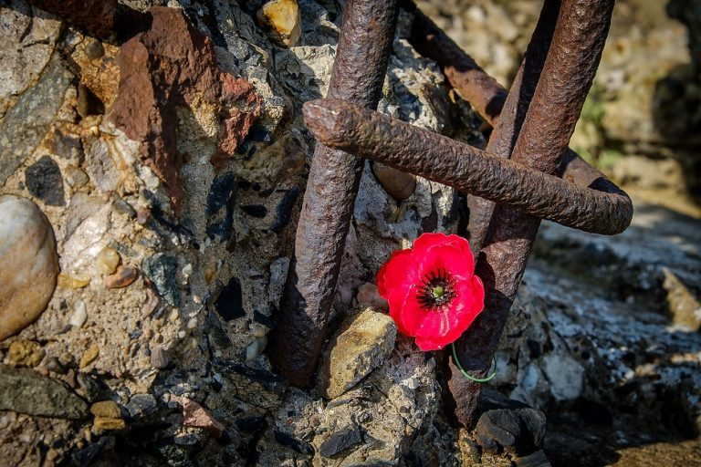 A poppy tied to metal reinforcing bars on the ruins of the German concrete blockhouse at Fromelles, Nord, France