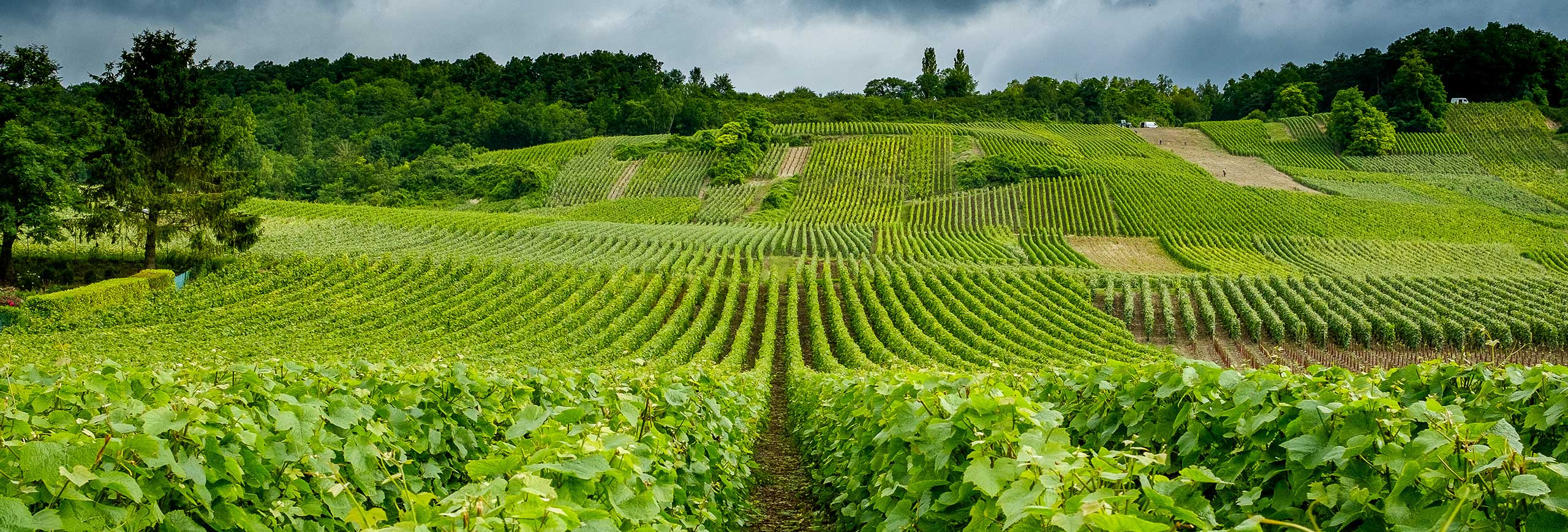 Champagne vineyard, France - stock photography by Chris Mann